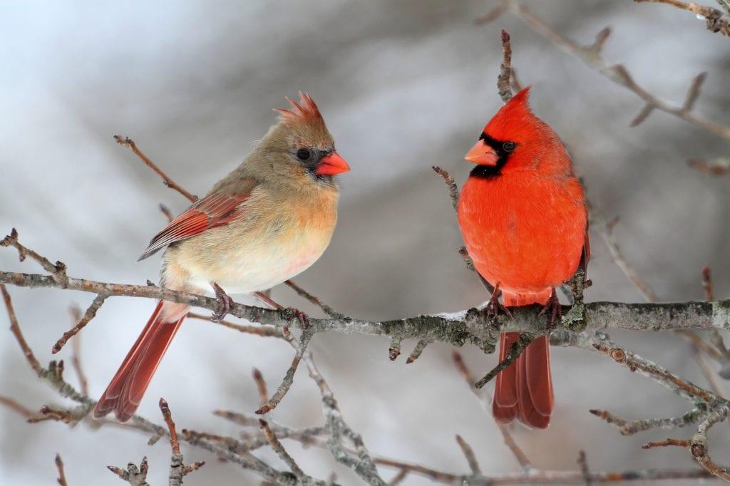the great backyard bird count activity