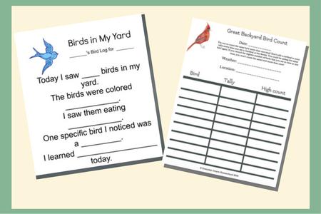backyard birdwatching download