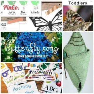 pinterest butterfly unit study ideas