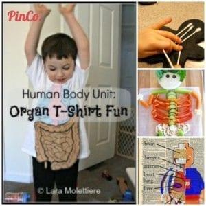 Pinterest Human Body unit study ideas