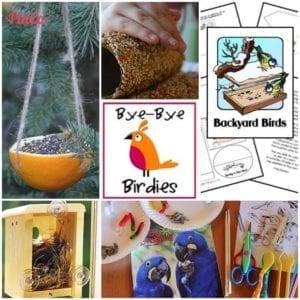 pinterest bird unity study ideas