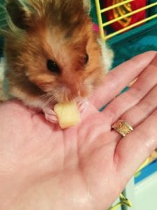 a pet in the homeschool room to help special needs students