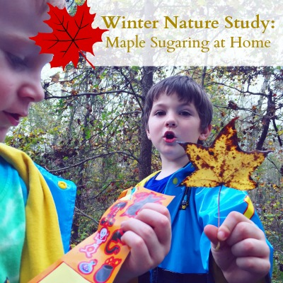 Maple Sugaring Winter Nature Study