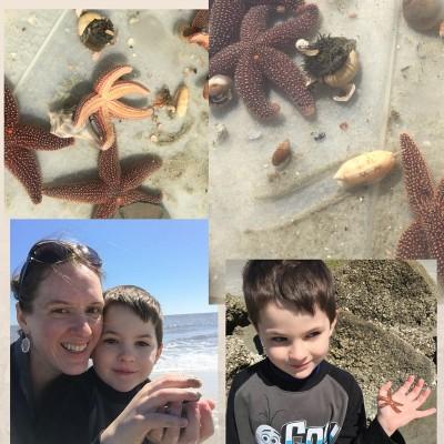 sea stars at Tybee Island