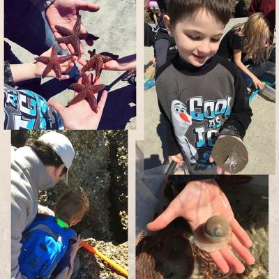 Tybee beach marine biology