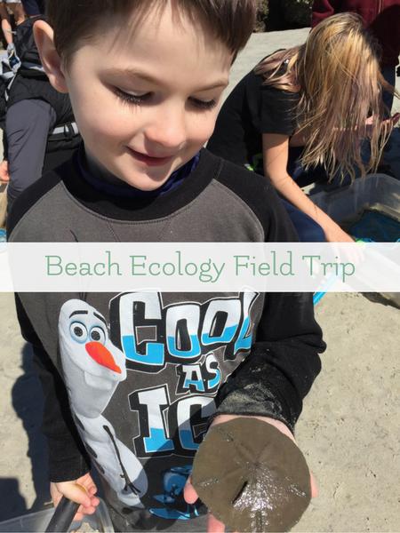 beach ecology nature study