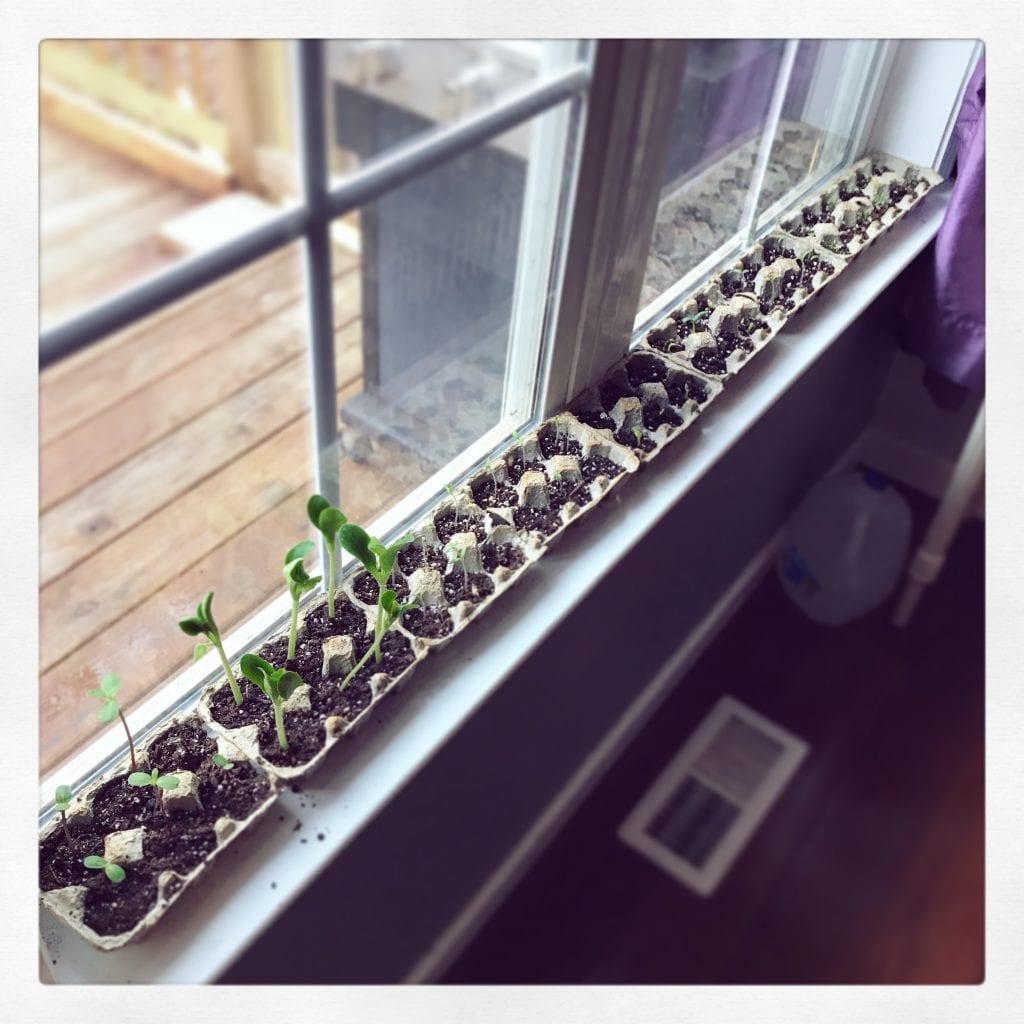homeschool plants